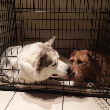 Dog Boarding - Sharing a Kiss