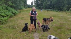 Dog Walking and Treats