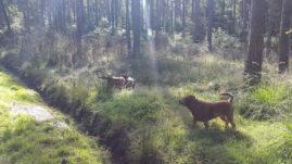 Dog Walking in Bracknell Forest