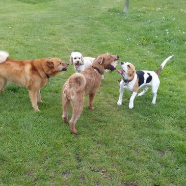 Dog Walk Chavey Down