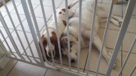 Suki from Binfield & Bertie from Warfield having a cuddle