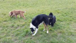 Dog Walking Binfield